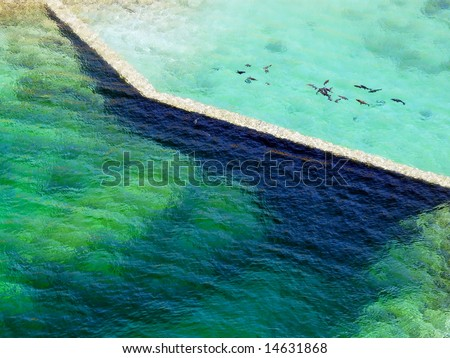 Various marine life swimming together in a body of water. Horizontally framed shot.