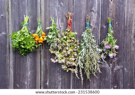 various medical summer herbs bunches on old wooden farm wall