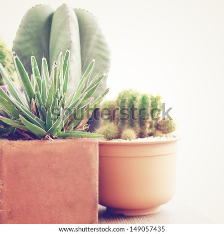 various of cactus with retro filter effect