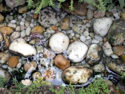 various pebble river stone in clear water stream with rock weed in pond, garden decoration with fresh and cool environment, calming in backyard relaxation corner, tranquil background closeup top view