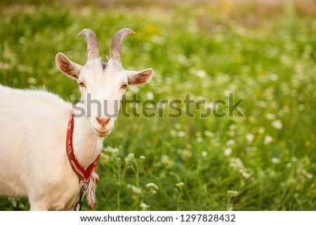 various pictures of kids feeding many baby goat.