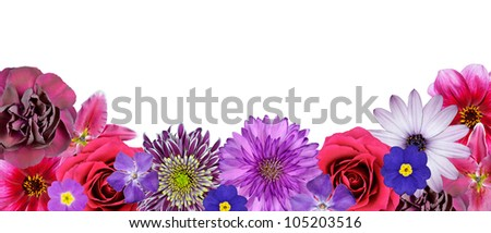 Various Pink, Purple, Red Flowers at Bottom Row Isolated on White Background. Selection of Nine Periwinkle, Rose, CornFlower, Lily, Daisy, Chrysanthemum, Dahlia, Carnation, Primrose Flowers