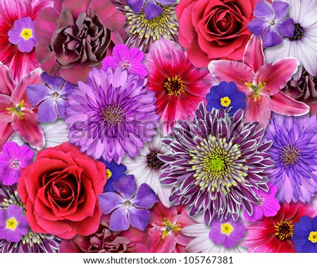 Various Pink, Purple, Red Flowers on top of each other.  Background with Selection of Nine Periwinkle, Rose, CornFlower, Lily, Daisy, Chrysanthemum, Dahlia, Carnation, Primrose Flowers
