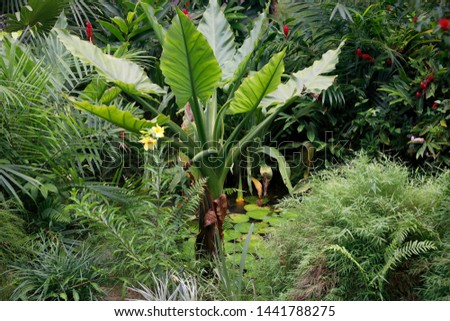 Various plants in the tropical rainforest
