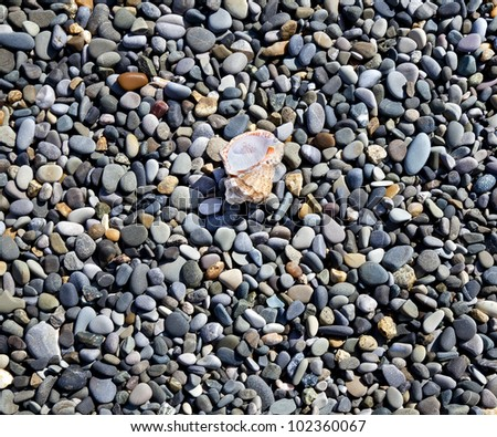 Various sea pebbles and seashell on shore