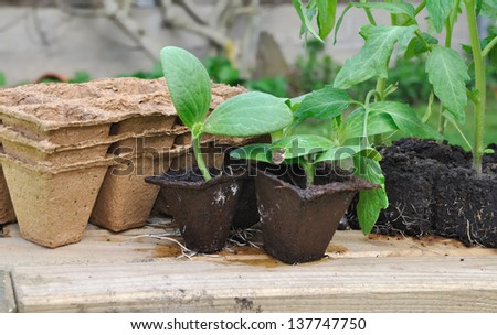 various seedlings with biodegradable pots on a plank outdoor