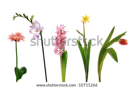 Various single spring flowers - stock photo