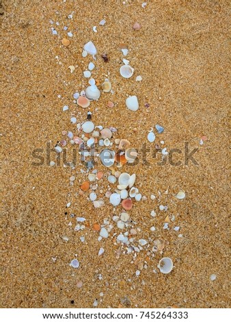 various size of seashell on yellow beach sand. #745264333