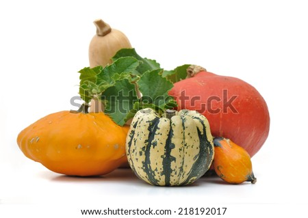 various  squashes with foliage on white background #218192017