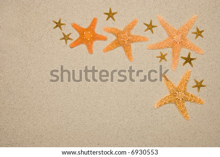 Various starfish sizes help to create a beach frame for use in any aquatic or nature setting.