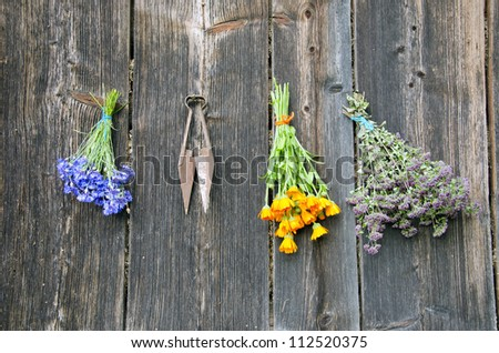 various summer medical herbs bunch on old wooden wall