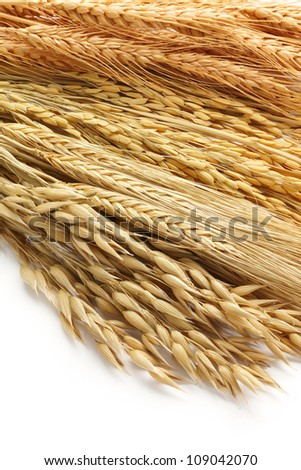 various type of cereals including oat, barley, paddy and wheat as background