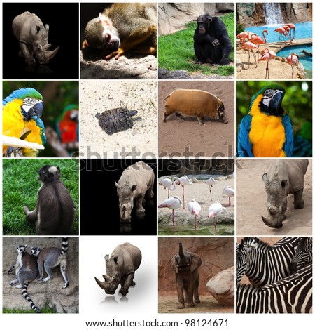 Various Animals Photos Various Wild Animals
