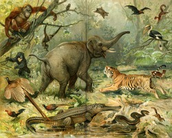 Various wild animals South East Asia. Publication of the book