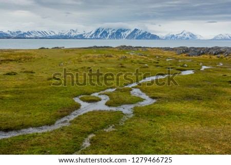 Varsolbukta. Streams of water flow over the moss.