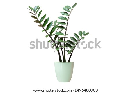 Vase decorate plants flowers rainy season green room hotel fresh interior beautiful wood tree floral wooden table office nature beadroom