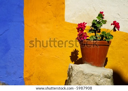 Vase with flowers against a colorful wall