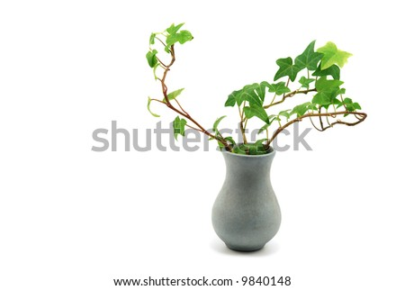 vase with ivy isolated on white