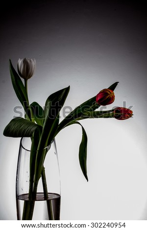vase with tulips, black and white tulips, black, white, light and shadow, black and white picture, tulips on a white background three tulips in a vase, the vase with water standing on the table