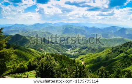 Vast Bamboo forest landscape taken on top of Moganshan mountain