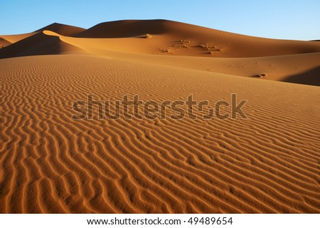 stock-photo-vast-dune-landscape-49489654.jpg