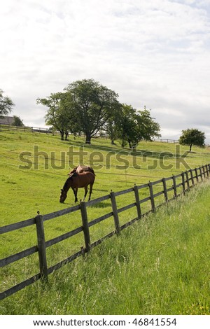 Vaud (Switzerland) - Horses at pasture in a  summer morning