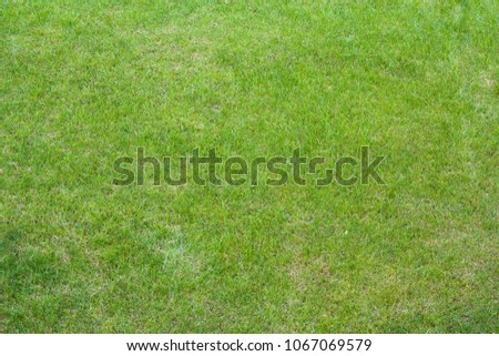 vClose up of clean fresh spring lavish bright green grass .Background,lawn ,football and basketball field.