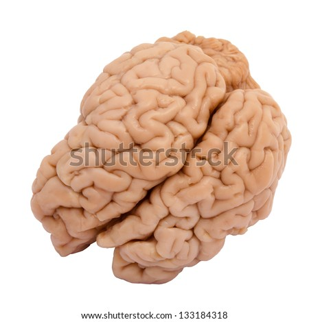 Veal brain isolated on white background