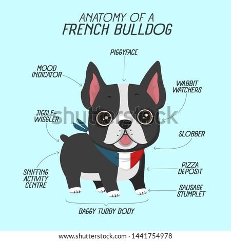 Vector fun icon pet dog french bulldog. Background anatomy of  dog breed French Bulldog. Illustration of pet puppy frenchie bulldog in flat style