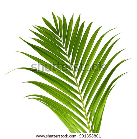 Vector illustration with green palm leave