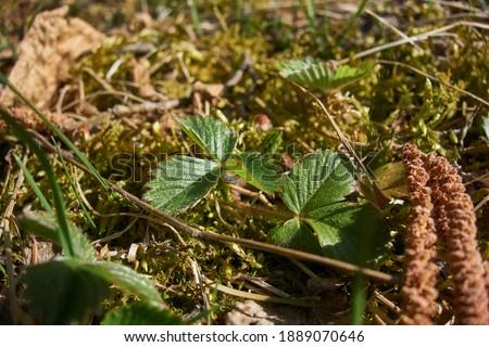 vegetácia trávy a listy rastlín Zdjęcia stock ©