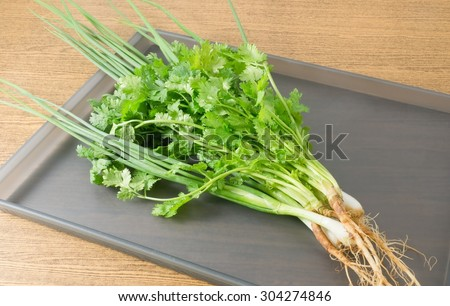 Vegetable and Herb, Bunch of Fresh Green Parsley, Chinese Parsley or Coriander and Scallion for Seasoning in Cooking on A Tray.
