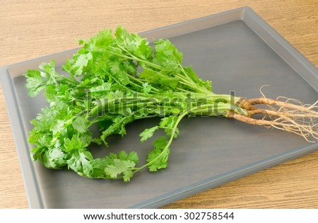 Vegetable and Herb, Bunch of Fresh Green Parsley, Chinese Parsley or Coriander for Seasoning in Cooking on A Tray.