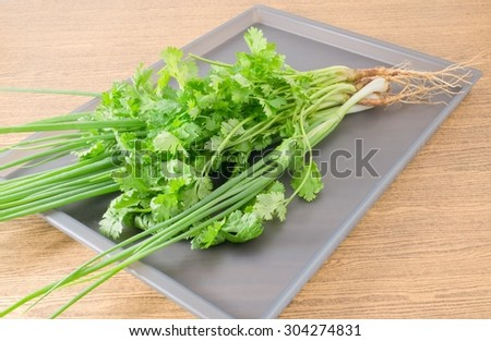Vegetable and Herb, Bunch of Green Parsley, Chinese Parsley or Coriander and Spring Onion for Seasoning in Cooking on A Grey Tray.