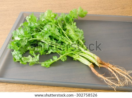 Vegetable and Herb, Bunch of Green Parsley, Chinese Parsley or Coriander for Seasoning in Cooking on A Grey Tray.