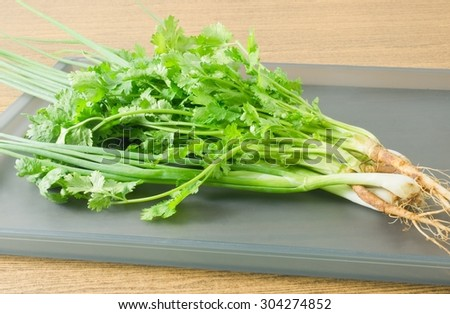 Vegetable and Herb, Bunch of Parsley, Chinese Parsley or Coriander and Scallion for Seasoning in Cooking on A Tray.