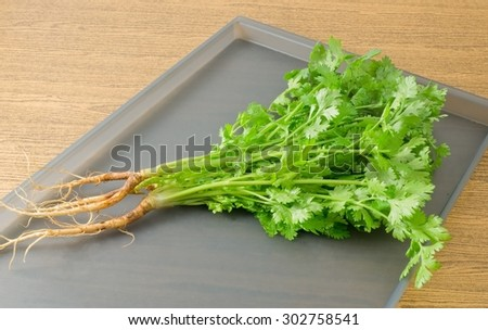 Vegetable and Herb, Bunch of  Parsley, Chinese Parsley or Coriander for Seasoning in Cooking on A Tray.