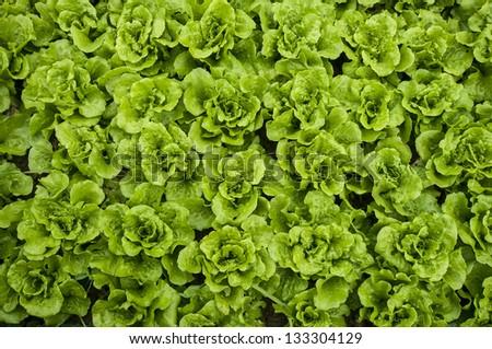 Vegetable background - stock photo