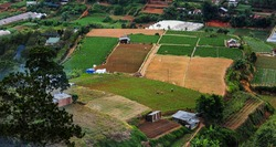 Vegetable farm in Dalat.,Vietnam