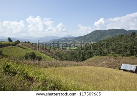 Vegetable farm view in the north of Thailand