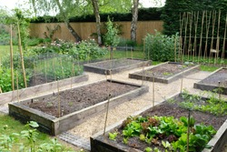 Vegetable garden, growing vegetables in a backyard in England, UK