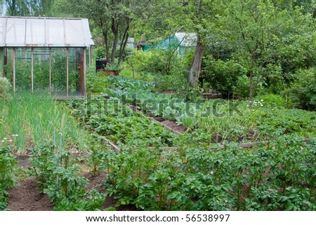 Vegetable garden in cloudy weather. One can see the beds with different vegetables and fruits, greenhouse and apple trees. No patio, no luxury, no lawn, no landscaping, no potager