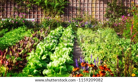 Vegetable garden in late summer. Herbs, flowers and vegetables in backyard formal garden. Eco friendly gardening