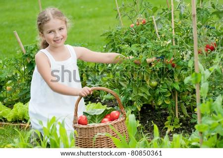 Vegetable garden - little girl picking ripe tomatoes