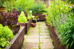 Vegetable garden with raised beds, focus on foreground