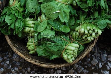 Vegetable Harvest in Farmers Market