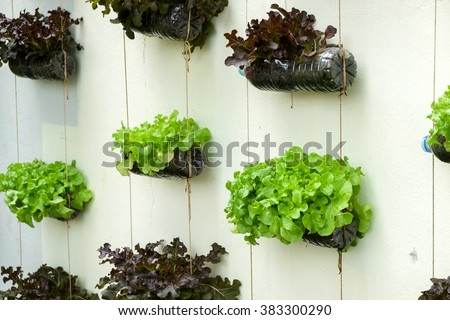 Shutterstock vegetable in decorated vertical garden Idea in the city