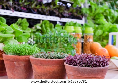 vegetable in flower pot