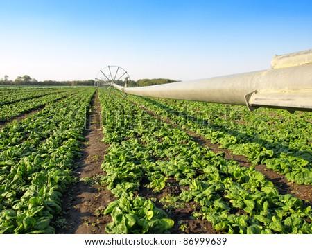 vegetable irrigation - stock photo