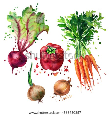vegetable mix with splashes of watercolor illustration. carrots, beets, onions, red pepper
